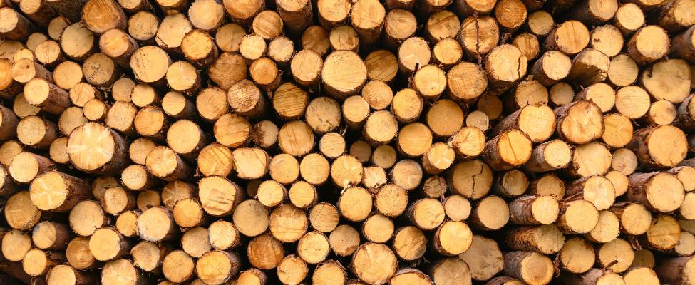 Регламент Європейського Союзу про лісоматеріали EUTR