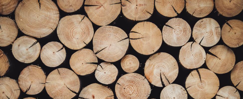 Сертифікація системи сталого управління лісовим господарством PEFC