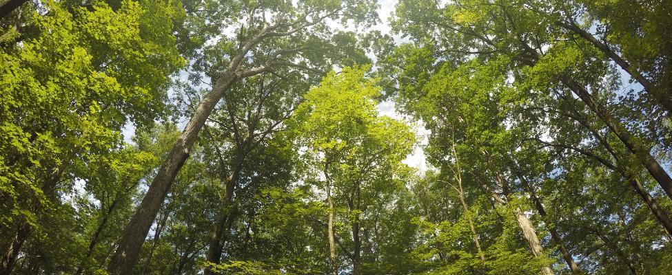 Сертифікація лісокористування FSC<sup>®</sup>
